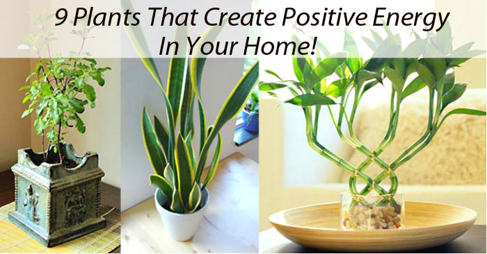 Gardening: 9 Plants That Create Positive Energy In Your Home!