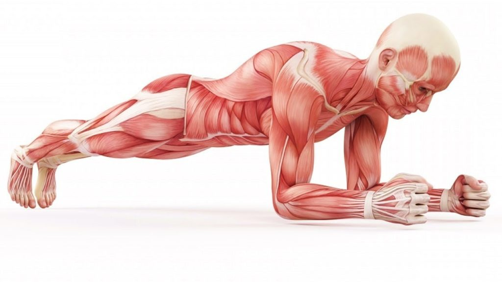 7 Things That Happen When You Do Planks Every Day