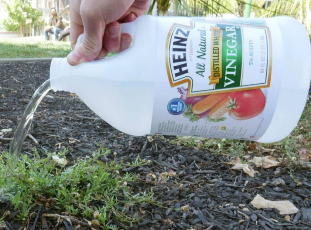 Gardening 101: Cool Uses of Vinegar In The Garden